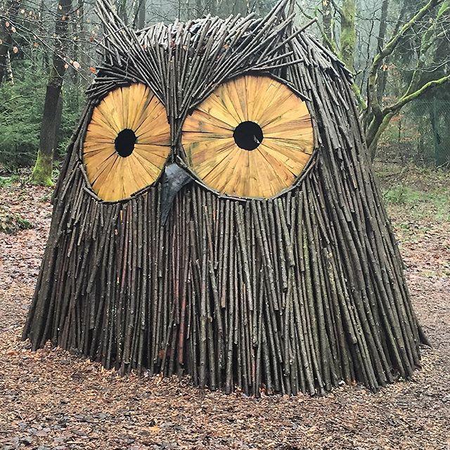 Mooi uiltje in het bos #hikingadventures #wallonie #ardennenweekend #chlorophylle #chlorophylleffect #nature #naturelover